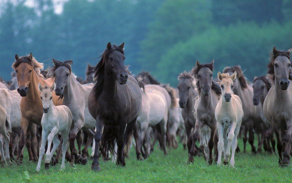 SpyraliArte e l'amore per i cavalli